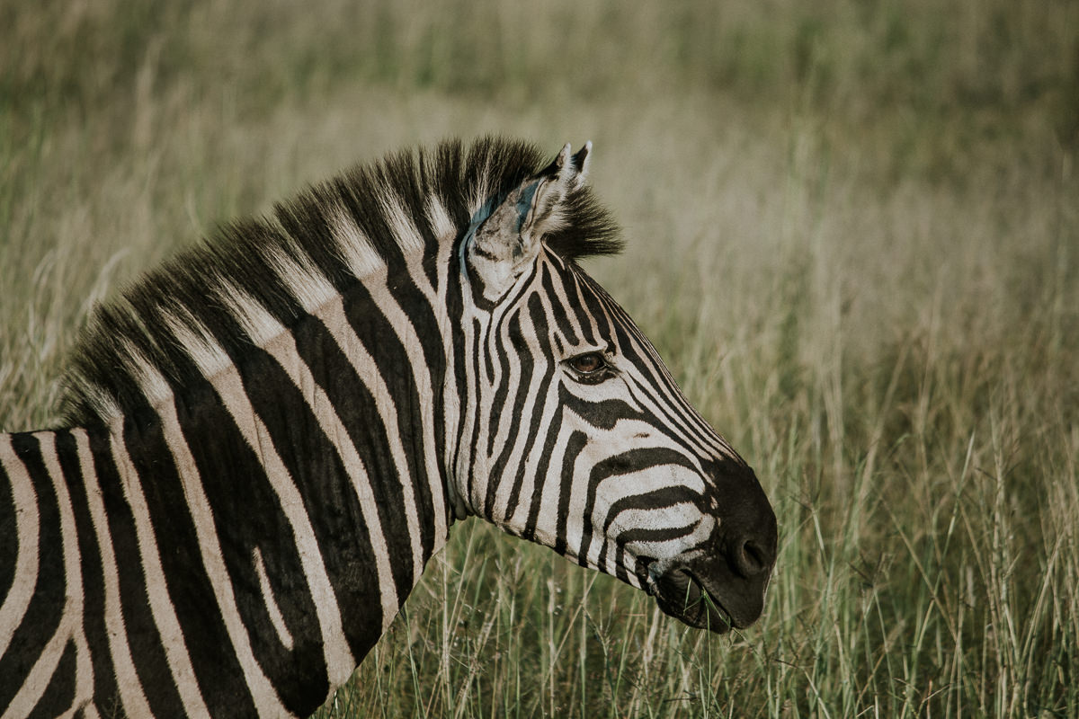 azambujas-na-africa-253