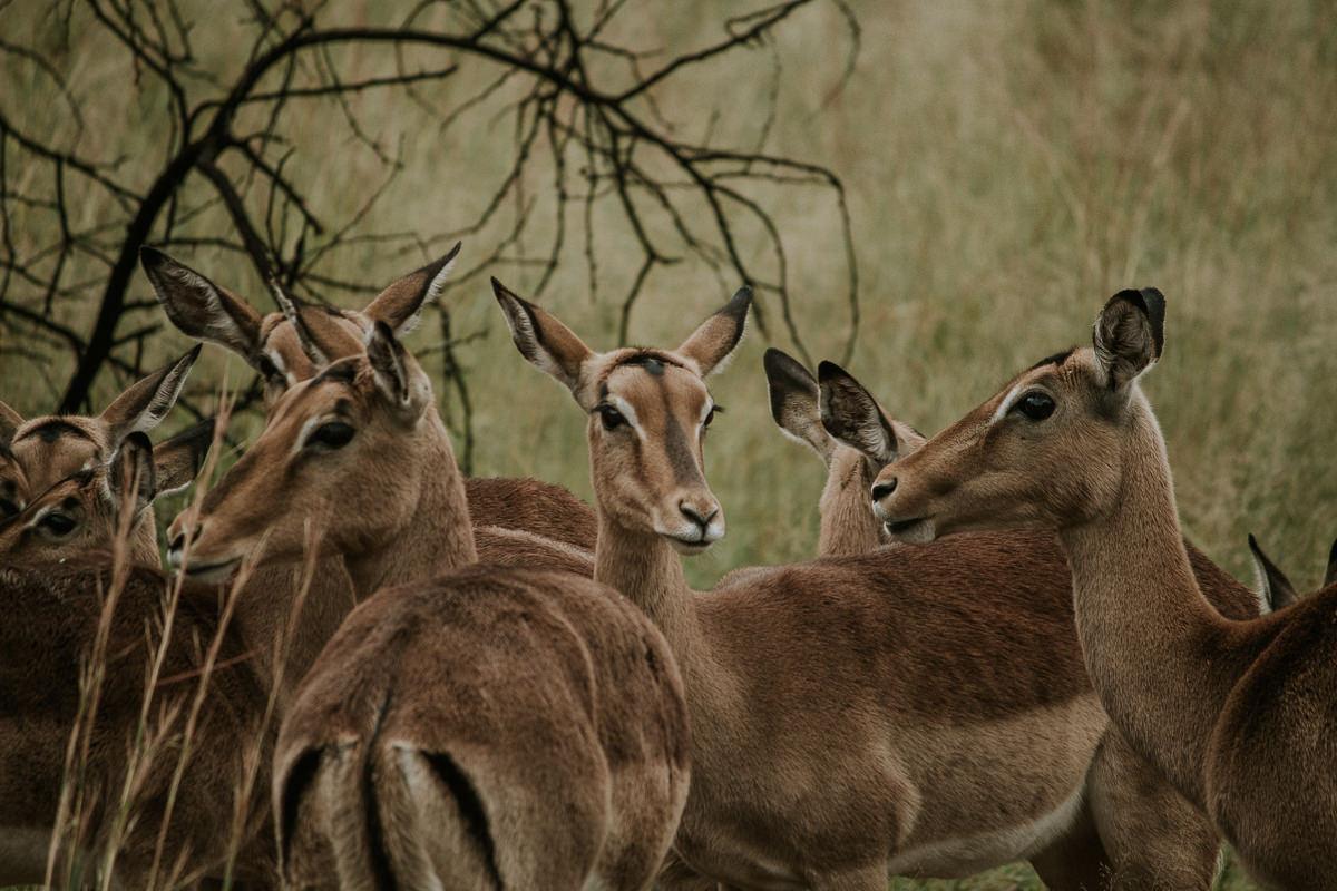 azambujas-na-africa-273